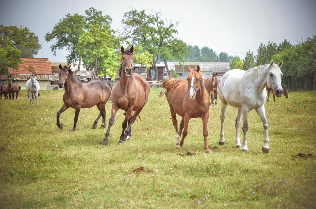 Bértartott lovak